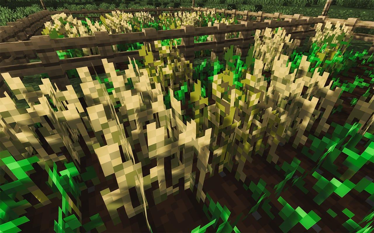 Wheat Field in Minecraft