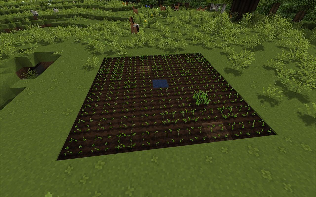 Minecraft 9x9 wheat farm